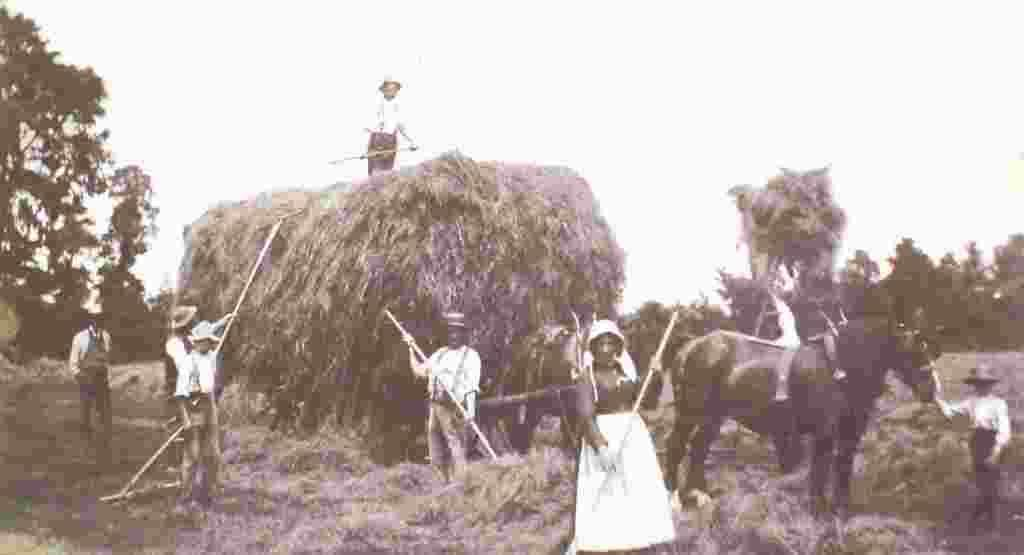 Yew Tree estate haymaking, 1890s